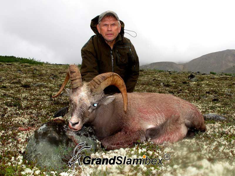 b-grand-slam-ibex-snow-sheep-11