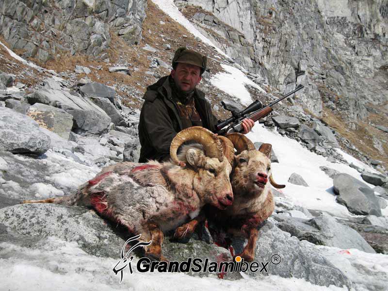 b-grand-slam-ibex-snow-sheep-3