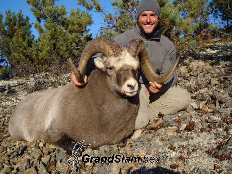 b-grand-slam-ibex-snow-sheep-4