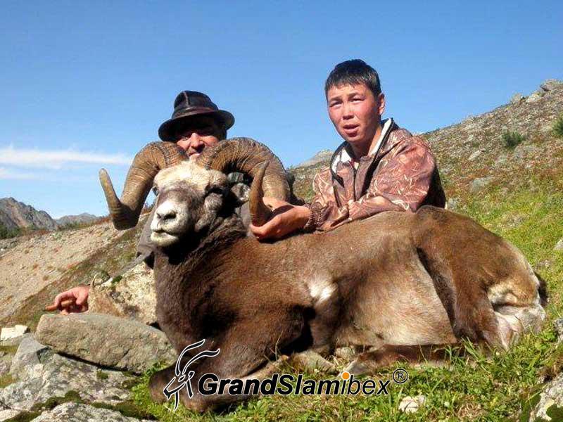 b-grand-slam-ibex-snow-sheep-5