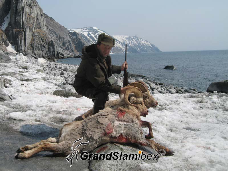 b-grand-slam-ibex-snow-sheep-7