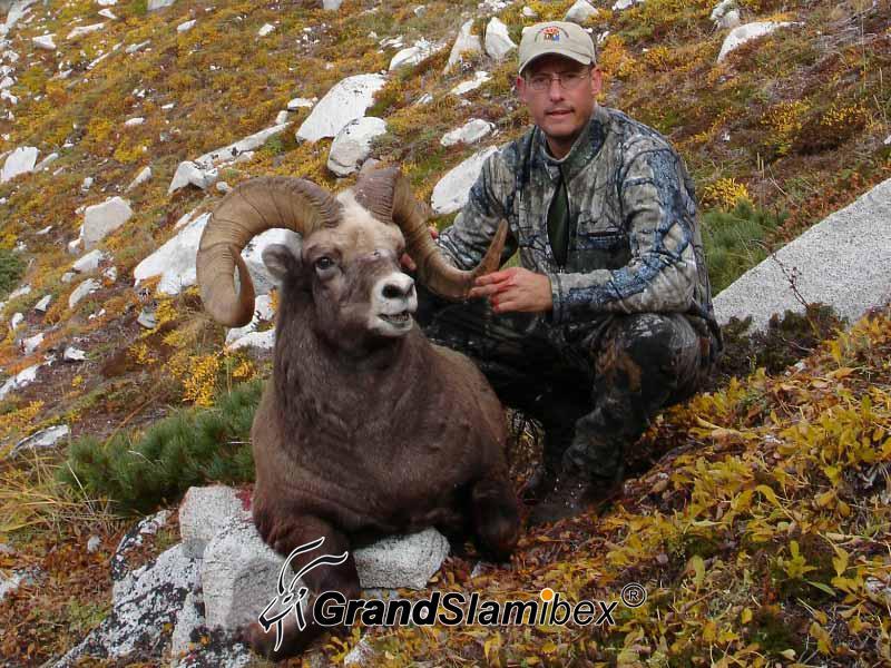 b-grand-slam-ibex-snow-sheep-8