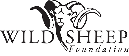 wild-sheep-foundation