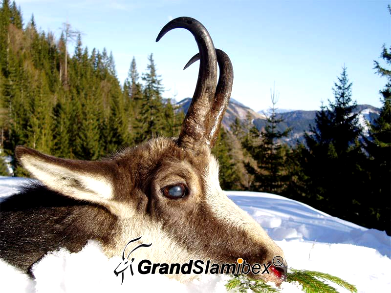 Alpine-Chamois-Hunt-in-Austria-S1 (2)