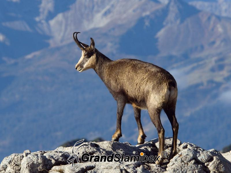 Alpine-Chamois-Hunting-in-Austria S2 (1)