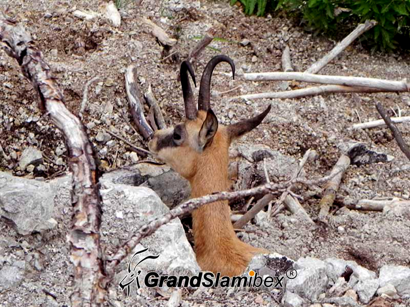 Alpine-Chamois-Hunting-in-Austria S2 (2)