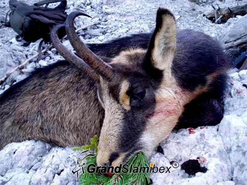 Alpine-Chamois-Hunting-in-Austria S2 (5)