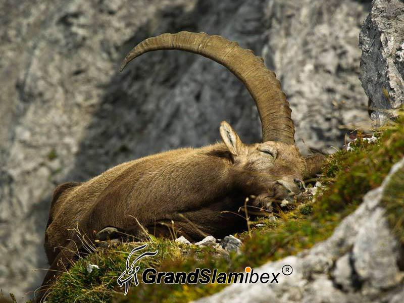 Alpine-Ibex-Hunting-in-Austria- S2 (4)