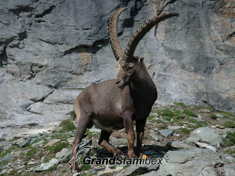 Alpine-Ibex-Hunting-in-Austria- S2 (5)