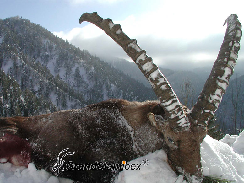 Alpine-Ibex-hunt-in-Switzerland -S1 (4)