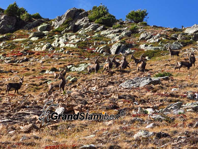 Alpine-Ibex-hunting-in-Switzerland- S2 (1)