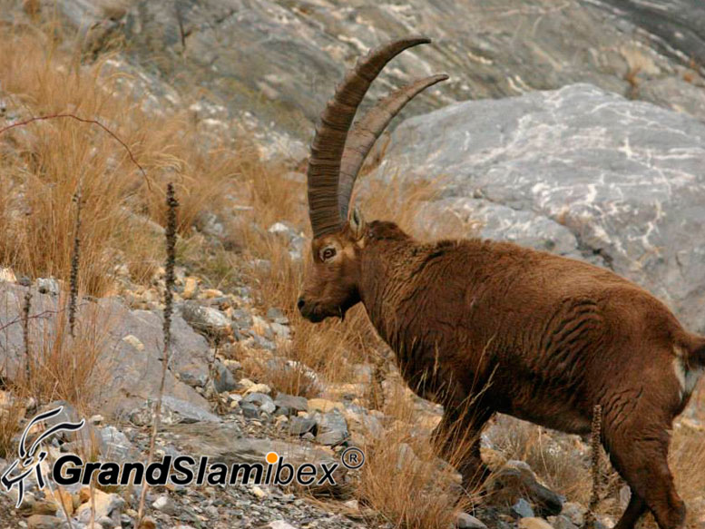 Alpine-Ibex-hunting-in-Switzerland- S2 (5)