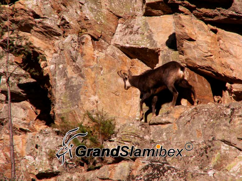 Alpine-chamois-hunt-in-Switzerland- S1 (1)