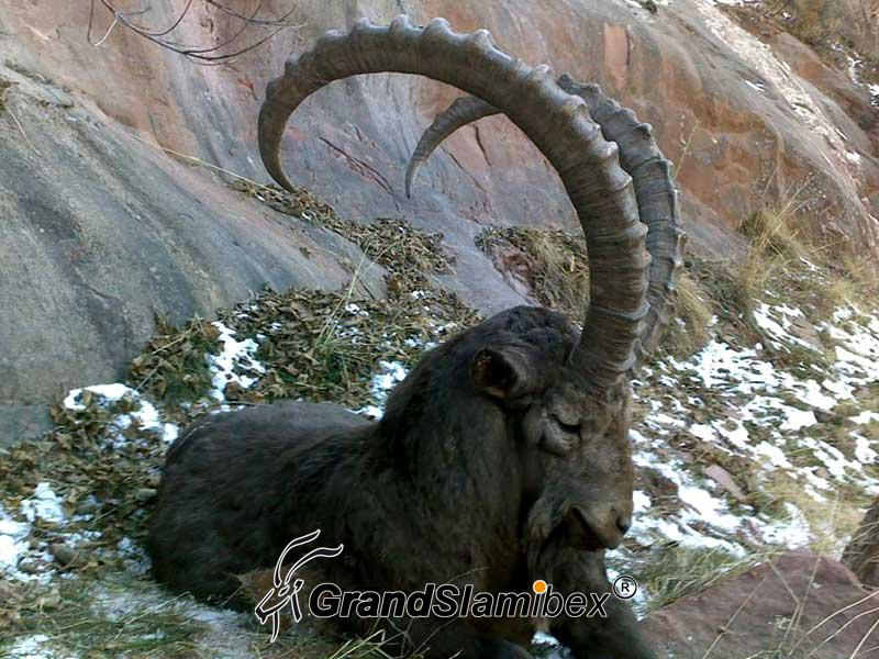 Altai-Ibex-Hunting-in-Mongolia- S2 (1)