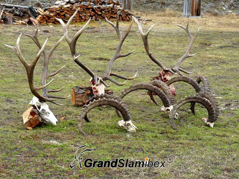 Altai-Ibex-Hunting-in-Mongolia- S2 (3)