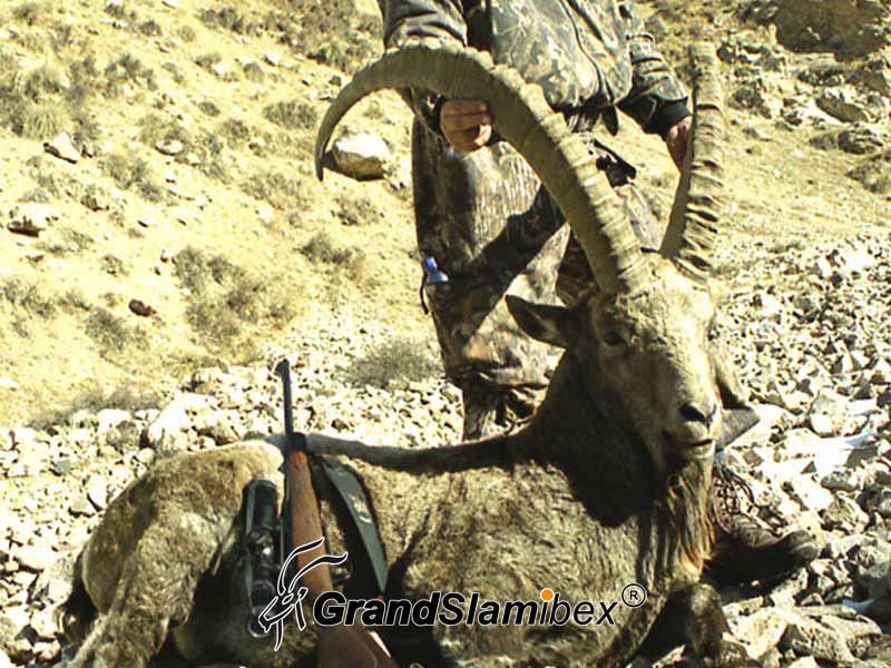 Mid-Asian-Ibex-Hunting-in-Kyrgyzstan-S2 (3)