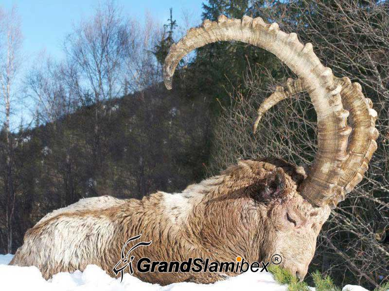 Mid-Asian-Ibex-hunt-in-Kyrgyzstan - S1 (3)