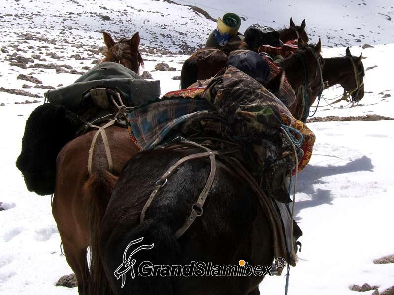 Mid-Asian-Ibex-hunt-in-Kyrgyzstan - S1 (5)