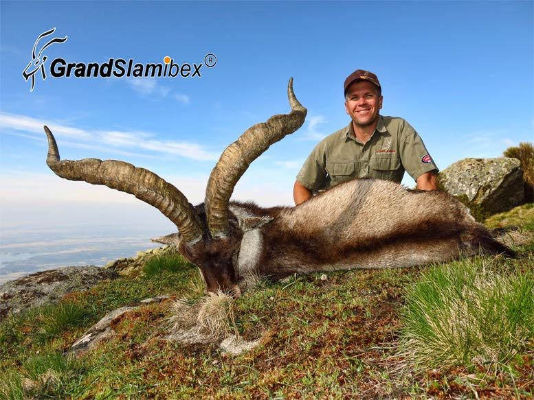 gredos-ibex-hunting-in-spain-4