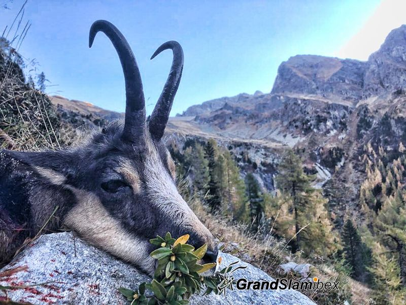Alpine-Chamois-Hunting-in-Switzerland
